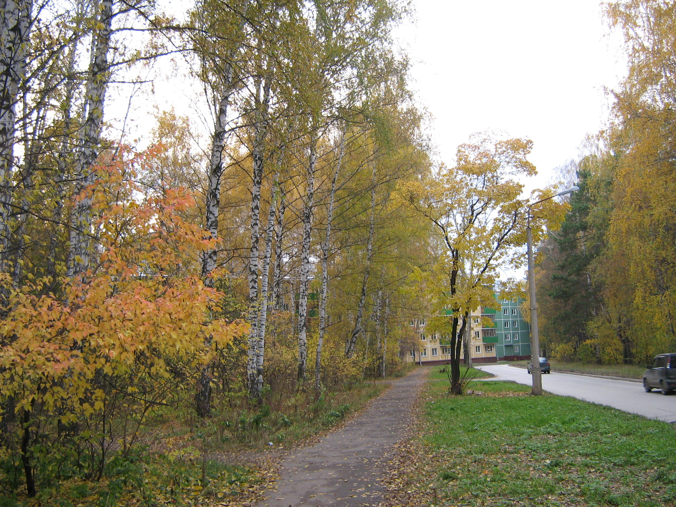 Autumn in Akademgorodok